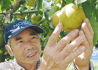 育った梨の生育状況を確認する金子昇さん