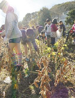 賑やかに催された大豆の収穫作業