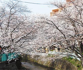 桜の名所として知られる麻生川(写真は過去に撮影)