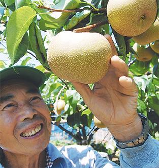 大きく実った梨の出来栄えを確かめる金子昇さん