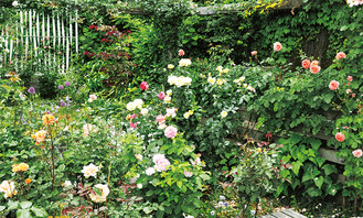 庭一面に花が咲く(過去の様子)