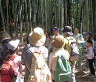 初夏の竹林にふれる