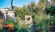 写真も楽しい秋の庭