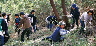 のこぎりを使って竹林を整備