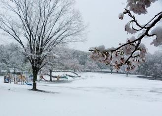 雪に覆われた王禅寺ふるさと公園(29日午前11時ごろ)