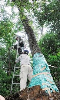 ナラ枯れに感染した樹木を伐採するボランティアメンバー=14日、早野聖地公園
