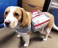 ペット避難グッズを開発