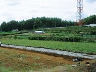 広大な農地で芋堀り体験