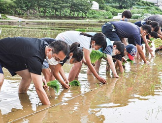 一列になって苗を植える参加者