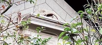 蔵の庇の上にある象