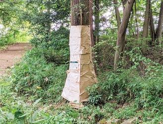 八王子市長生公園のナラ枯れ調査