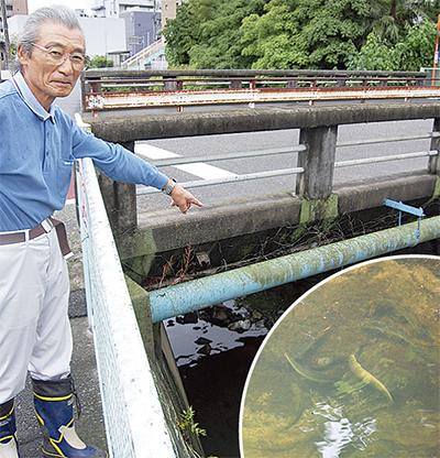 麻生川に鮎が遡上