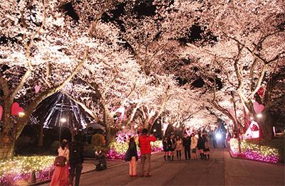 園内に1千本の桜