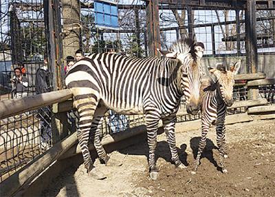 夢見ヶ崎動物公園の裏側など見学