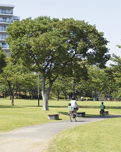 緑広がる若葉台公園