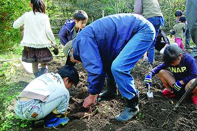 虹ヶ丘小児童が芋掘り