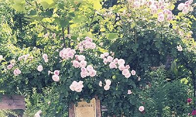 800種の花を公開