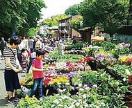 生田緑地で園芸まつり