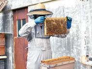 県川産ハチミツ「味わって」