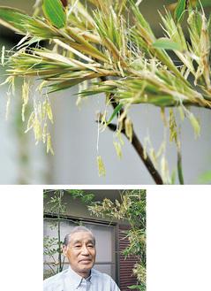 稲穂のような竹の花(上)と中島さん(右)