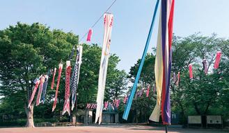 夢見ヶ崎公園のこいのぼり(昨年)