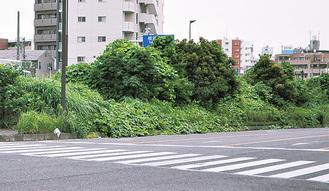 池田二丁目交差点付近の中央分離帯