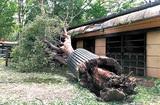 動物園、倒木に悲鳴