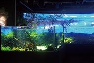 市初の水族館、きょう開館
