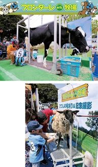 牛の乳しぼり(上)やひつじの毛刈り(右)を楽しむ参加者