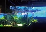 魚たちの写真を投稿