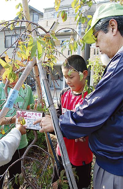 桜川公園の樹木にプレート設置