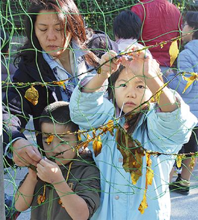 ワカメ収穫祭