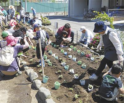 ヒマワリ800株を植栽
