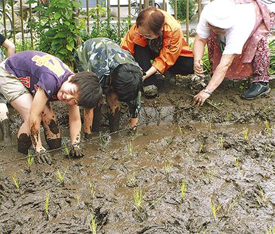 泥んこで農作業体験