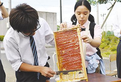 校内で養蜂、はちみつ採集