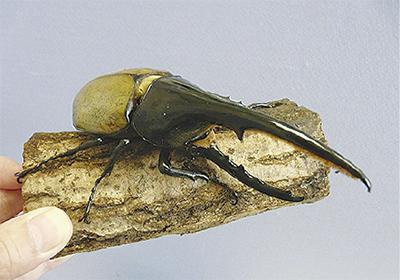 生きた昆虫と触れ合う