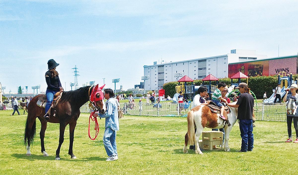 芝生で乾杯 家族で楽しむ川崎競馬場