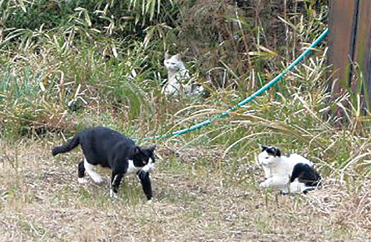 地域猫活動へ歩みを開始