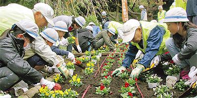 夢見ヶ崎公園で花植え