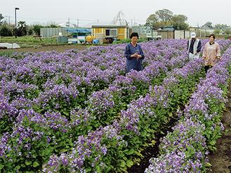 幼なじみと協力して栽培している篠崎さん。満開が楽しみ