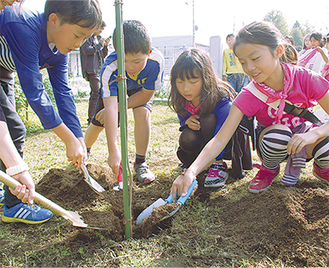 4本のヤマザクラを校内に植えた=26日、星が丘小