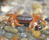 各地の甲殻類が大集合