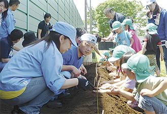 一列に並び植え付けを行う園児たち
