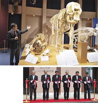 館内の展示物の解説をする博物館の高槻成紀氏(上)テープカットの様子(下)