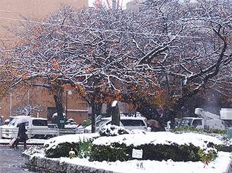 紅葉に降り積もる雪=11月24日正午ごろ、市役所さくら通り
