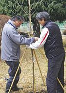 """""""咢堂桜""""で平和の精神を"""