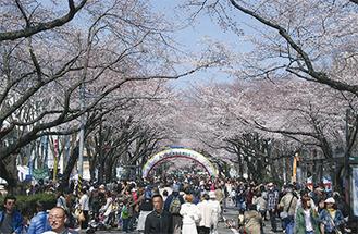 会場の通りを彩る主役の桜(写真は過去)