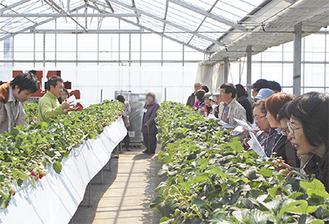 いちご農家「なるベリーファーム」(田名)でいちご栽培の方法や苦労を話した成井さん(左)