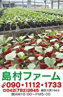 """""""野菜苗""""25日(火)販売開始失敗しないと評判"""