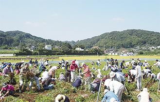 昨年も多くの人が来場した落花生収穫祭